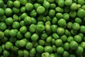 growing peas